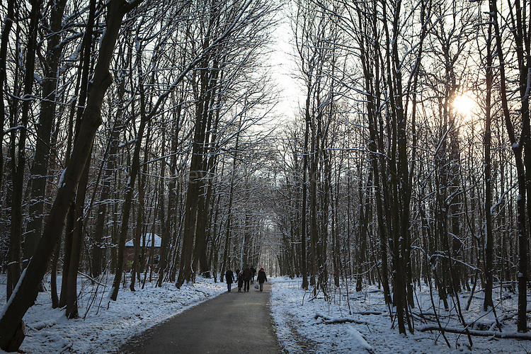 "Winter snow in the Sonian Forest, Foret de Soignes, or Zoniënwoud, an 11,000 hectare woodland to the southeast of Brussels, providing a ""green lung"" for the polluted, traffic choked city. The forest is currently in three jurisdictions, Brussels, Flanders and Wallonia, but EU involvement in 2013 will see development of plans to re-unify the forest, for the benefit of humans and wildlife."