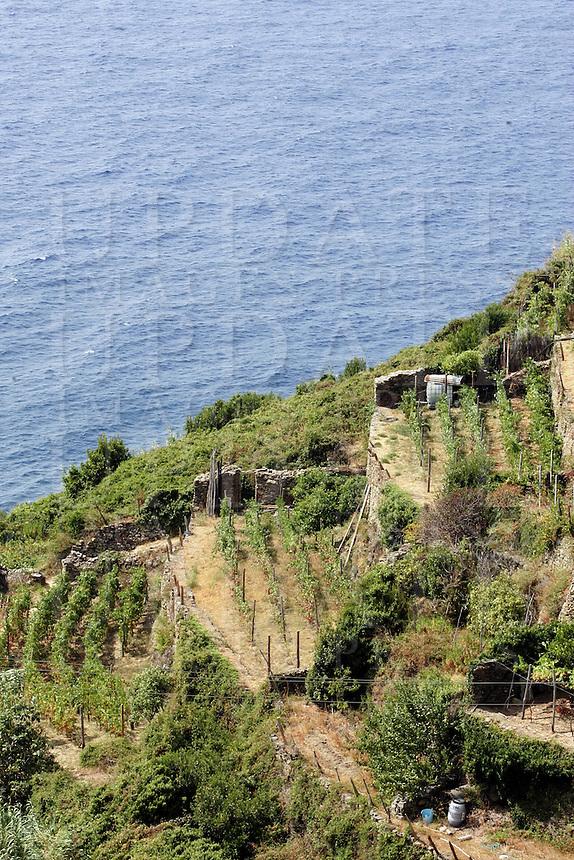 Vigneti lungo la costa delle Cinque Terre.<br /> Vineyards along the coast of the Cinque Terre.<br /> UPDATE IMAGES PRESS/Riccardo De Luca