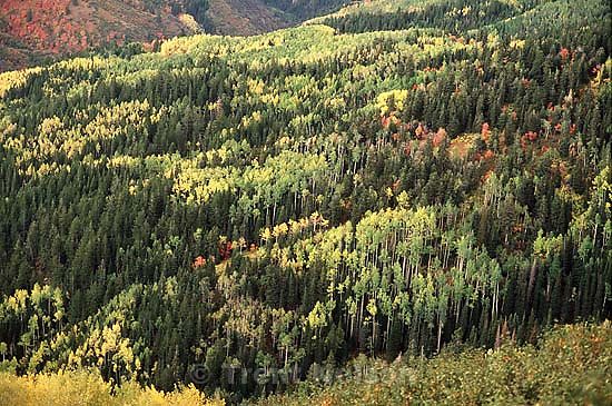 Fall colors on Nebo Loop<br />