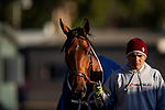 OCT 29: Breeders' Cup Distaff entrant Dunbar Road, trained by Chad C. Brown,  at Santa Anita Park in Arcadia, California on Oct 29, 2019. Evers/Eclipse Sportswire/Breeders' Cup