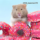 Xavier, ANIMALS, REALISTISCHE TIERE, ANIMALES REALISTICOS, photos+++++,SPCHHAMSTER172,#A#, EVERYDAY ,funny