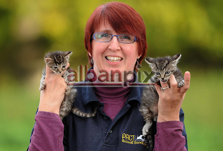 ©Albanpix.com. Pic by Rob Howarth.Sue Leske from PACT animal centre in Woodrising, Norfolk that has been overrun with an influx of kittens