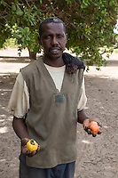 Farmer with Cashew Nuts and cashew Apples, near Sokone, Senegal