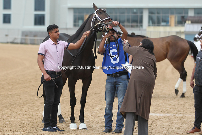 February 17, 2020: Warrior's Charge (6) before the Razorback Handicap at Oaklawn Racing Casino Resort in Hot Springs, Arkansas on February 17, 2020. Justin Manning/Eclipse Sportswire/CSM