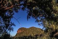 tree, pino, trees, arbol , arboles, arbusto, luz de dia , luz, ,a travez, atravez, marco, enmarcado, vista, visto desde , panoramica, panoramic, landscape, paisaje, verde, siembra, sembradíos , sembrado, siembra, ejidos, ejidal, cosecha, cultivo, pino, árbol ,pino