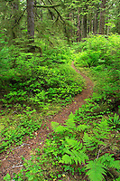 Trail through old grown forest, Mora Campground, Olympic National Park, Olympic Peninsula, Clallam County, Washington, USA