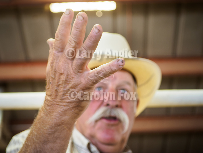 53rd annual Junior Livestock Auction during Day 4 of the 79th Amador County Fair--Junior Livestock Auction, Destruction Derby, exhibits, music and more!<br /> <br /> #AmadorCountyFair, #PlymouthCalifornia,<br /> #TourAmador, #VisitAmador