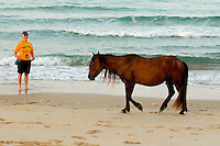 A wild pony walks along the beach in the North Carolina Outer Banks. Photo is part of a series of images taken at Pamlico Sea Base, a Boy Scouts of America High Adventure Camp located on the Pamlico River south of Washington, NC. The BSA Sea Base program is centered around sea kayaking treks on the North Carolina Outer Banks and sailing programs on the historic Pamlico River...Photography by: Patrick Schneider Photo.com