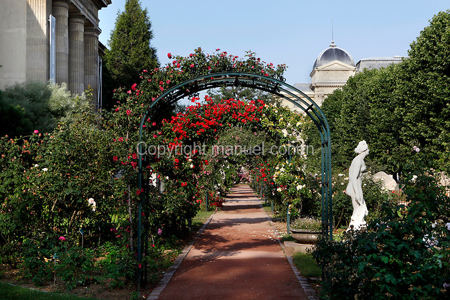 The central path shaded by climbing roses, in the jardin de roses et de roches (the rose and rock garden) created in 1990 and located in the Jardin des Plantes, Paris, 5th arrondissement, France. On the right the statue called Venus Genitrix, on the left the Galerie de Mineralogie de Geologie et de Paleobotanique and in the background the Grande Galerie de l'Evolution. Founded in 1626 by Guy de La Brosse, Louis XIII's physician, the Jardin des Plantes, originally known as the Jardin du Roi, opened to the public in 1640. It became the Museum National d'Histoire Naturelle in 1793 during the French Revolution. Picture by Manuel Cohen