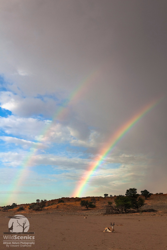 Double rainbow on the frontier of an incoming summer storm over the Nossob River Valley