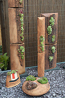 Sempervivums and sedums succulent plants in interesting containers planters by Axios Gallery