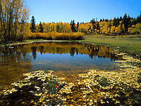 Art in Nature 9609-0135 - A small pond makes for a large impression as it reflects golden fall foliage and a clear blue sky in Payson Canyon. Wasatch Range, Rocky Mountains, Utah.
