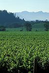 Vineyards along Napa Valley, California
