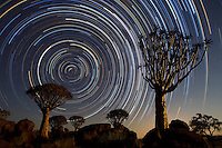 Quiver trees (Aloe dichotoma) and Star Trails
