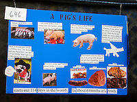A poster made by 4H student Morgan Olsen, 10, from Mountain Meadow Elementary, hangs above his pig's pen at the Northwest Junior Livestock Show at the Washington State Spring Fair in Puyallup, Washington on April 17, 2015.Posters are judged on educational value, originality and artistic ability.
