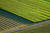 Crop fields, Pueblo County, Colorado.  August 2011