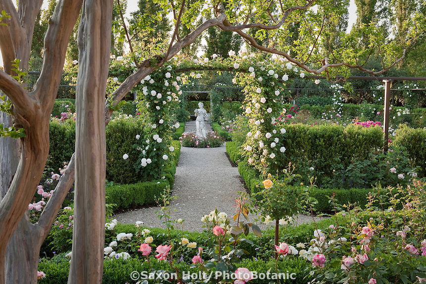 Gravel path entry into formal rose garden framed by Rose Mme Alfred Crriere on trellis and Crape Myrtle tree