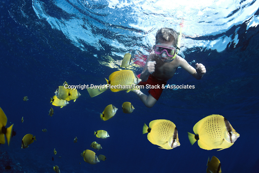 Boy snorkeling with butterflyfish