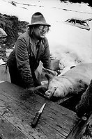 Switzerland. Canton Valais. Hèrens valley. Evolène. Swiss alpine farmers. Alps mountains peasants. A man has killed a pig for meat. Slaughtered animal for butchery. Winter season. Snow. © 1995 Didier Ruef