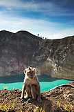 INDONESIA, Flores, Kelimutu National Park and volcano, a monkey sits by the edge on the rim of Tiwu Nuwa Muri Koo Fai crater lake