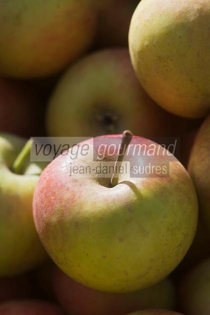 Europe/France/Pays de la Loire/49/Maine-et-Loire/ Angers:Pommes Reine des Reinettes sur un étal du marché