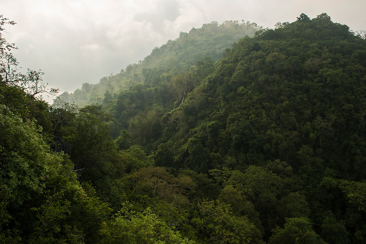 Limestone rainforest area in the Xishuangbanna Tropical Botanic Gardens
