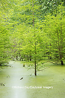 63895-14611 Bald Cypress trees (Taxodium distichum) Heron Pond Little Black Slough, Johnson Co. IL