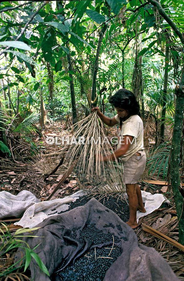 Colheita de açai na Floresta Amazônica, Acre. 1999. Foto de Ricardo Azoury.