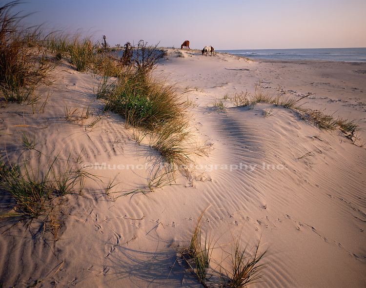 North Beach Assateague Island NS  MARYLAND