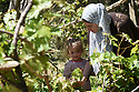 A PIECE OF JORDAN - TRAVEL FEATURE.PICKING VINE LEAVES FOR DINNER WITH THE TWASSI FAMILY. PHOTO BY CLARE KENDALL. 07971 477316.