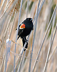 2017- ECC Spring Migratory Bird Walk