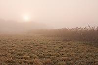 Peaceful Harvested Farmer's field in the morning fog