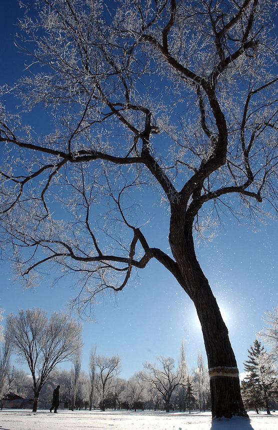 A fine hoar frost blankets Crescent Park in Moose Jaw, Sask. MARK TAYLOR/Moose Jaw Times-Herald
