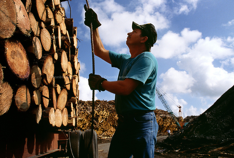 A logger unloads a truckload of timber at Gilman Paper Company in St. Mary's, Georgia. <br /> The company prodeuces 2.6 million pounds of paper per day.