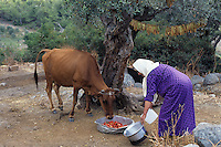 Farmer woman with cow