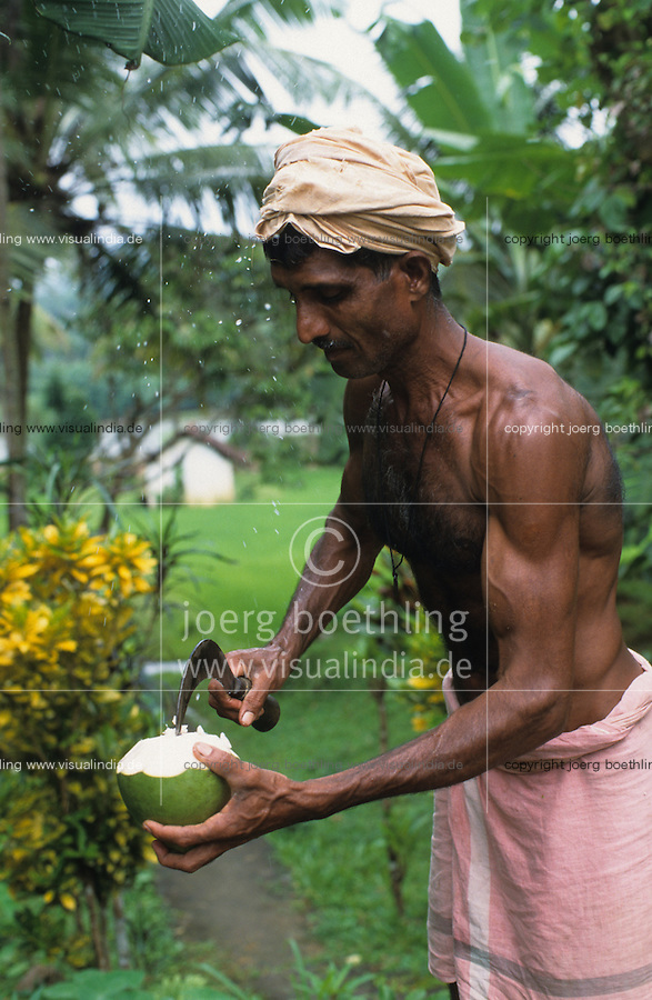 INDIA Karnataka, farm near Mangalore, farmer cut fresh coconut to drink / INDIEN, Farm bei Mangalore, Farmer oeffnet eine frische Kokosnuss zum Trinken