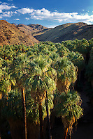 Overview of Palm Canyon. Indian Canyons. Palm Springs, California.