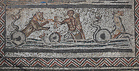 Roman mosaic of Amphitryon's chariot, detail from below Orpheus surrounded by animals, from the House of Orpheus, Volubilis, Northern Morocco. Volubilis was founded in the 3rd century BC by the Phoenicians and was a Roman settlement from the 1st century AD. Volubilis was a thriving Roman olive growing town until 280 AD and was settled until the 11th century. The buildings were largely destroyed by an earthquake in the 18th century and have since been excavated and partly restored. Volubilis was listed as a UNESCO World Heritage Site in 1997. Picture by Manuel Cohen