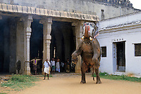 Painted and decorated elephant rearing up on hind legs before going on a procession devoted to Vishnu, Sri Ranganathaswamy Temple, Tiruchirappalli, India.