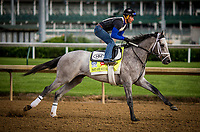 LOUISVILLE, KY - MAY 03: Fast and Accurate gallops at Churchill Downs on May 03, 2017 in Louisville, Kentucky. (Photo by Alex Evers/Eclipse Sportswire/Getty Images)