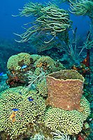 Reef scenic<br />