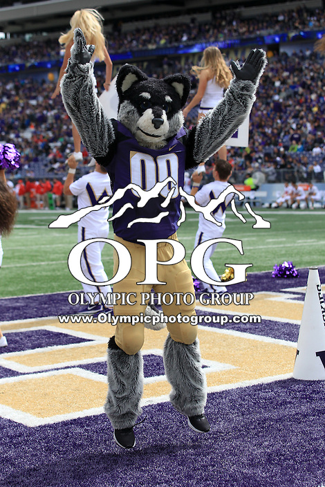 03 September 2016:  Washington's mascot Harry entertained fans during the game against Rutgers.  Washington defeated Rutgers 48-13 at the University of Washington in Seattle, WA.