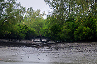 A creek inside the forest during a low tide. Sunderbans, West Bengal, India. Arindam Mukherjee