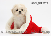 Kim, CHRISTMAS ANIMALS, photos, GBJBWP27677,#XA# stickers