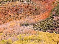 Aspen Cascade, Sierra Nevada
