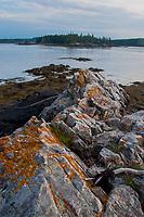 Orange lichens on tidal rocks, Nautilus Island, Castine, Maine, US