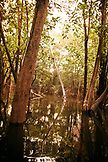 BRAZIL,  Amazon Jungle landscape, navigating the mangroves, Agua Boa fishing lodge