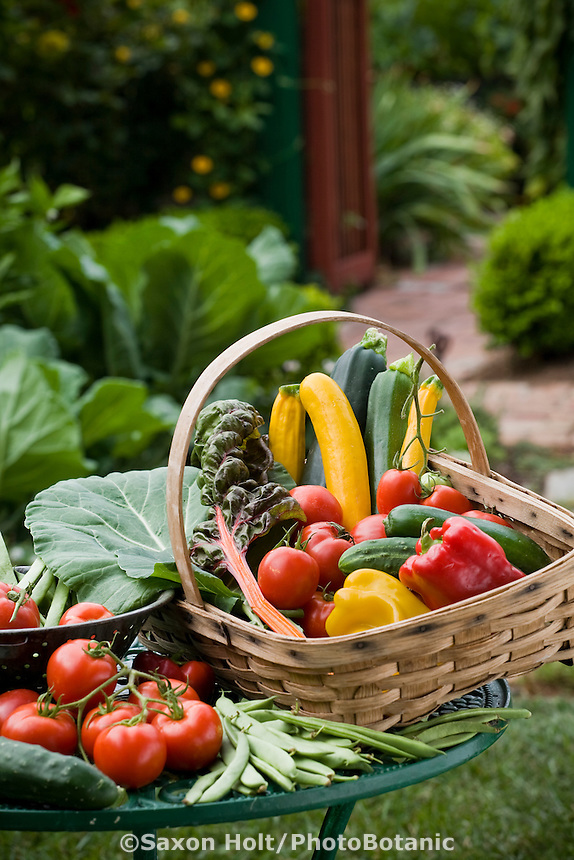 Bountiful harvest basket of organic vegetables in Rosalind Creasy small space garden
