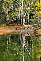 Dam water reflections gum trees