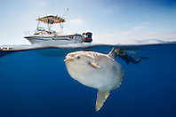 ocean sunfish, Mola mola, snorkeler with underwater video camera, and offshore fishing boat, off San Diego, California, East Paficic Ocean